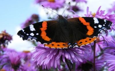 Pożyteczne owady w ogrodzie