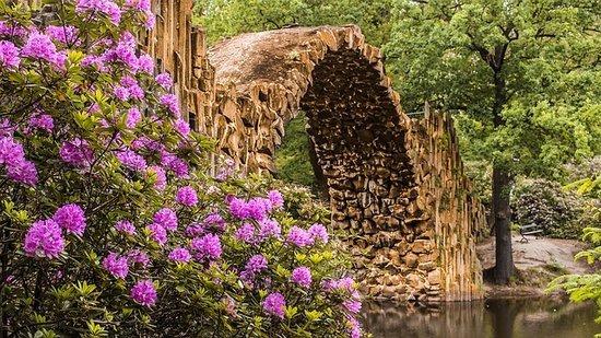 Królewski rododendron